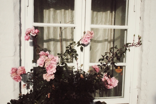 a rosegarden outside my window pretty spaces