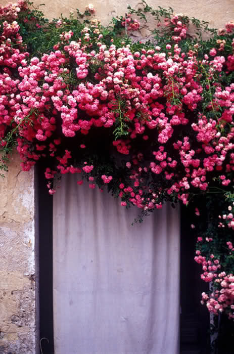 rosegarden outside my window